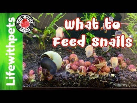 What To Feed Snails