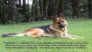 K9 German Shepherd Training Guide
