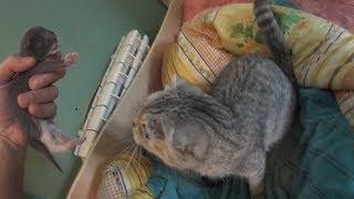 Кошка родила двух котят