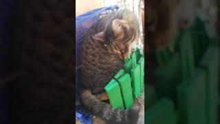 Наглая кошка ща сломает мой телефон