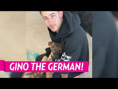 Meet Nick Jonas and Pryianka Chopra Jonas' New Dog Gino.