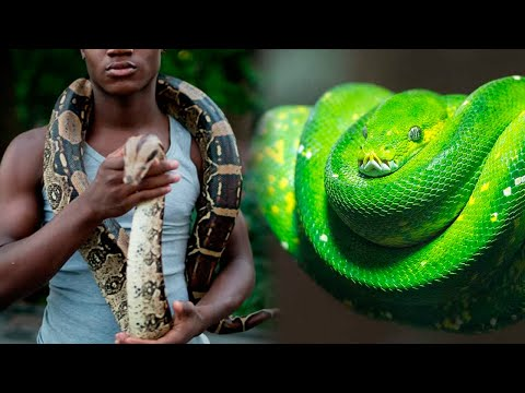 10 SNAKES You Can Have As A PET
