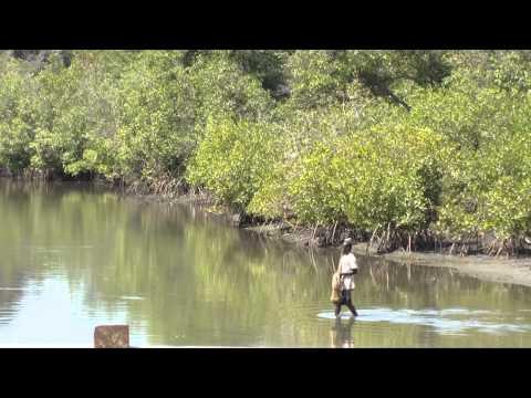 Gambia Kotu Creek
