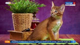 В Барнауле у кошки за миллион появились котята