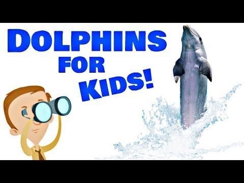Dolphins For Kids | Animal Learning Videos
