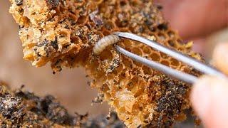 Пчеловодство: борьба с Восковой молью) Хранилище рамок(, 2016-11-20T13:20:04.000Z)