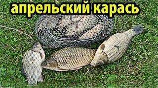 САМОЕ ВРЕМЯ ЛОВИТЬ КАРАСЯ КАРАСЬ ВЕСНОЙ рыбалка в апреле рыбалка 2021 весной где искать карася весно