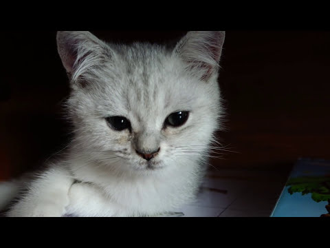 💖 Bantik IN CHILDHOOD 😺 🐈 KITTEN 🎀 🐯 WHICH LITTLE rumbling from the channel SAVI