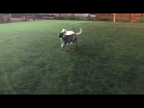 köpeklerle-parktan-kovulduk