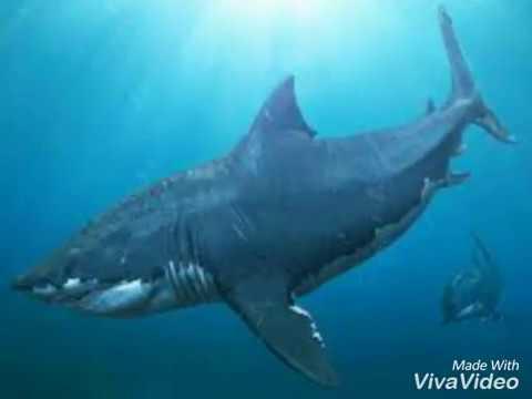 Top10 i pi pericolosi e grandi dinosauri marini youtube for Disegni marini da colorare