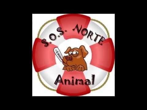 SOS Norte Animal - Perros en adopción