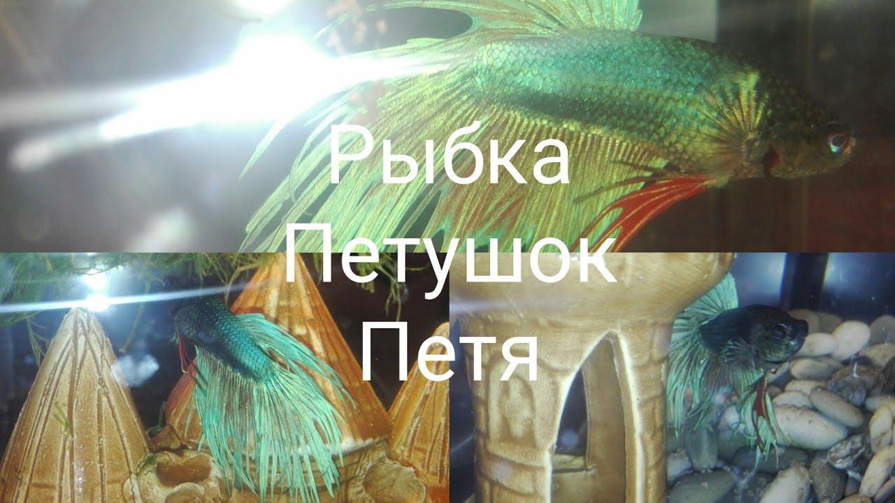 Самая низкая цена на морозильный ларь ergo bd-100. ✅кредит 0% ✅оплата частями ✅доставка по всей территории украины   comfy (комфи).