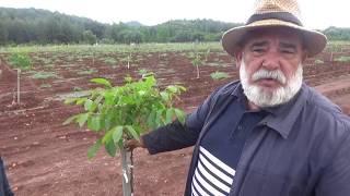 Antalya Kaş - Ceviz Fidanı Dikerken Dikkat Edilmesi Gerekenler - Bahçe Tesisi