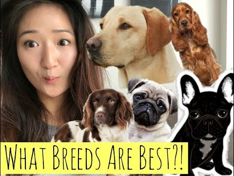 THE BEST DOG BREED? | What breed should you choose?