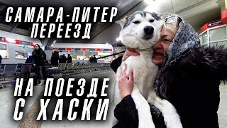 Переезд Пигановых из Самары в Санкт-Петербург на поезде с собакой. #перепереезд
