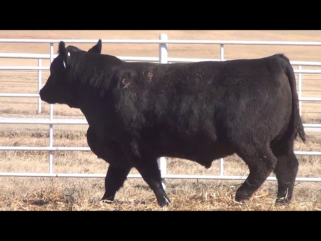 Express Ranches Lot 90