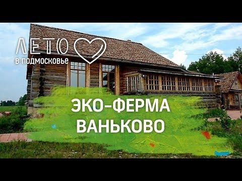 Лето в Подмосковье: агротуризм и экологические продукты в Ваньково