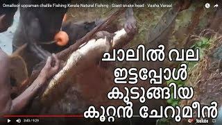 Omalloor uppaman chalile Fishing Kerala Natural Fishing - Giant snake head - Vaaha Varaal