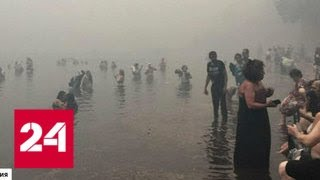 Огонь превратил Аттику в выжженную землю: живых найти все сложнее - Россия 24