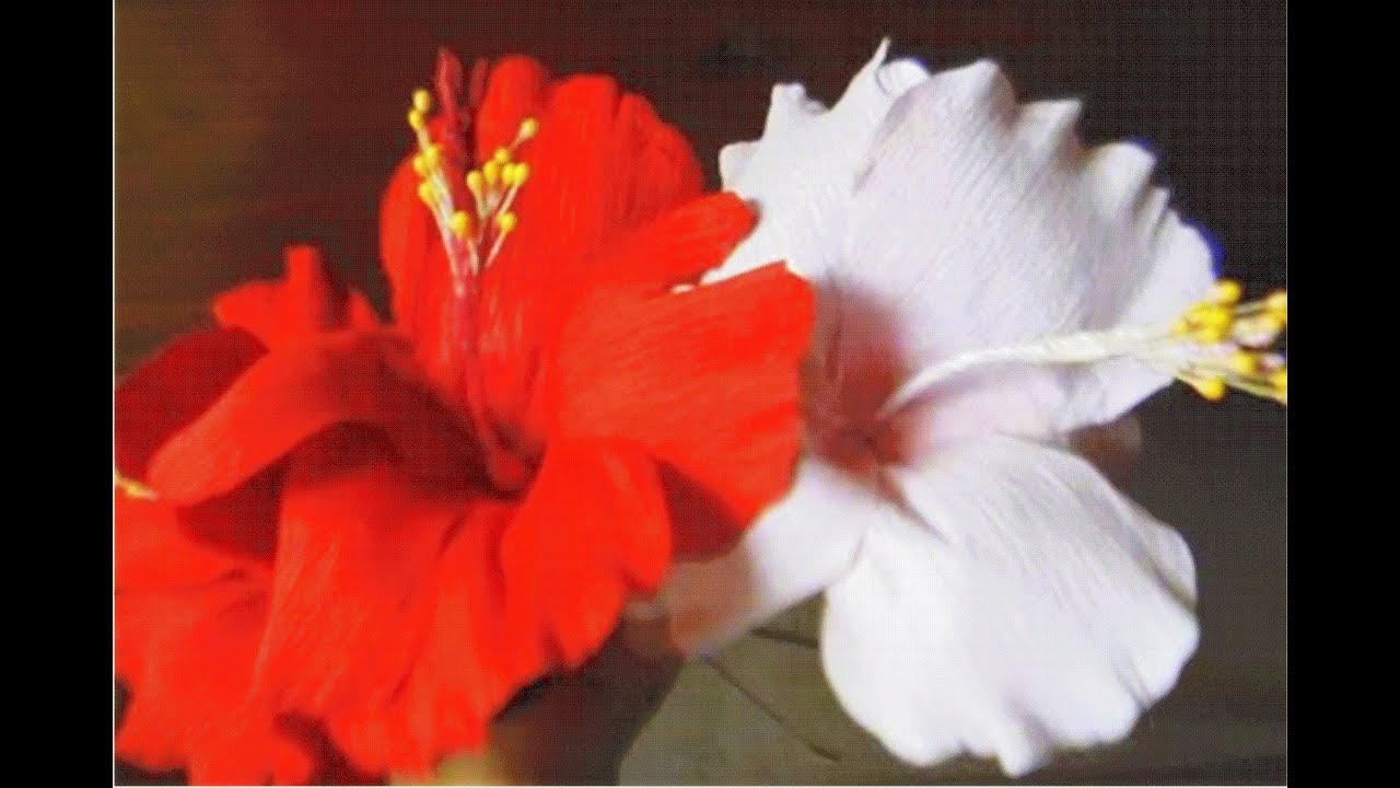 How to make paper flowers Hibiscus   Hibiscus rosa sinensis  Flower     How to make paper flowers Hibiscus   Hibiscus rosa sinensis  Flower   3     YouTube