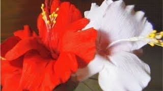 Howto Make Paper Flower - Hibiscus