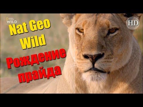 Nat Geo Wild: Рождение прайда (2018) Документальный фильм | HD 1080p