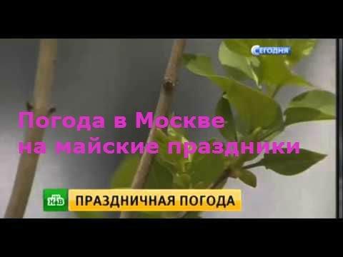 Погода в Москве на майские праздники