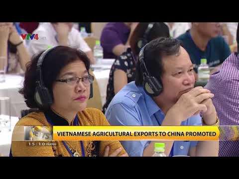 VTV News 15h - 12/08/2017