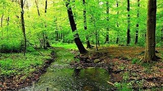 Звуки Ручейка. Звук Ручья в Лесу Природы. Пение Птиц для Сна и Отдыха. #RMT