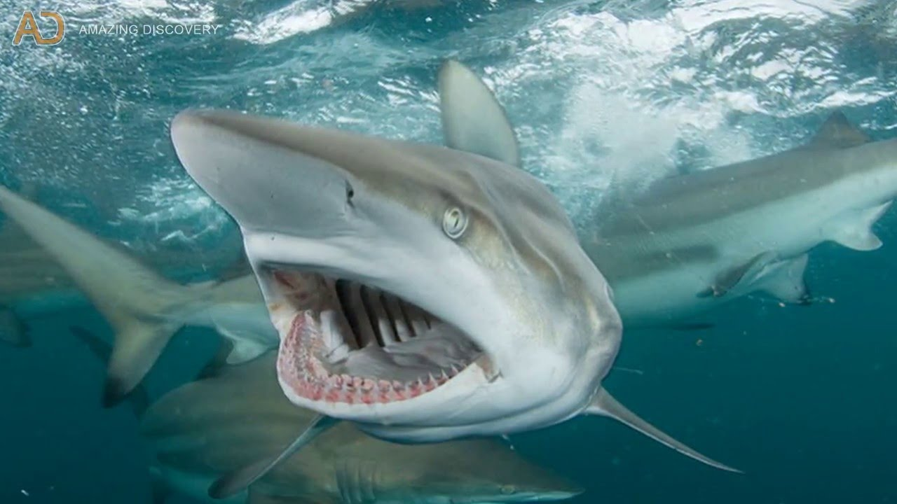 Dangerous Sharks | www.pixshark.com - Images Galleries ...