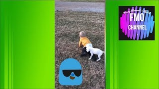 FUNNY ANIMALS VIDEO COMPILATION/FMO