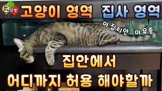 고양이 영역 집사영역 허용범위는?