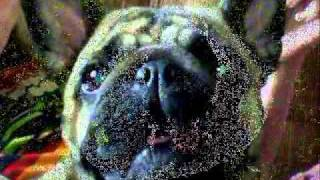 собака бывает кусачей..wmv
