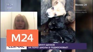В Подмосковье неизвестный подкинул к школе коробку с щенками - Москва 24