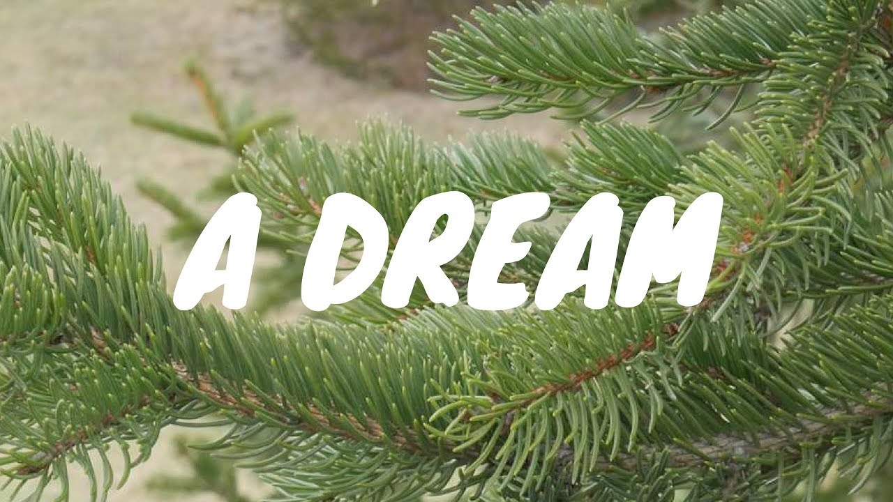 Dream Dream Fir, spruce, what dreams of Fir, spruce in a dream to see 75