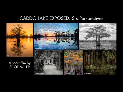"""""""CADDO LAKE EXPOSED: Six Perspectives"""" at Michelson Museum of Art in Marshall, Texas"""