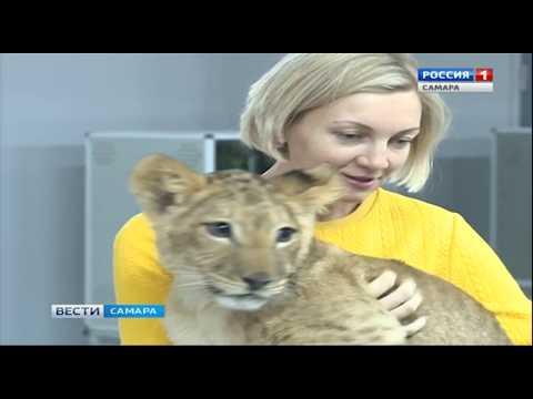 """""""Вести Самара"""": Из Самарской области пытались вывезти 187 миллионов рублей"""
