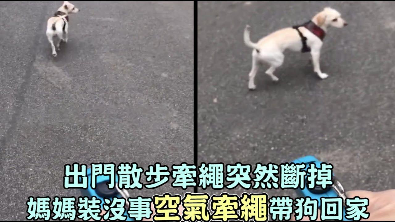出門散步牽繩突然斷掉,媽媽裝沒事「空氣牽繩」帶狗回家:牠完全沒發現