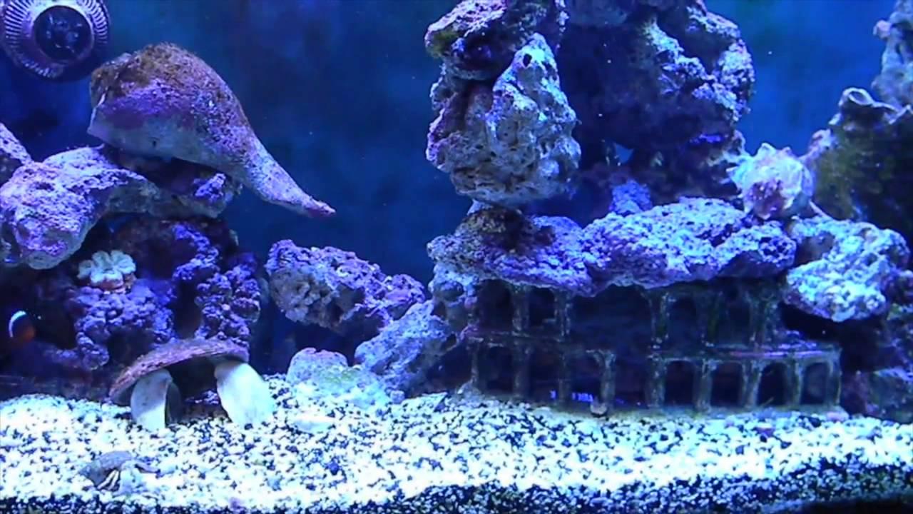 Aquarium Live Rock : How to stack Live rock in a 125G aquarium. - YouTube