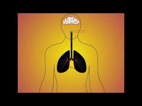 Animation sur les effets de la drogue sur le corps humain