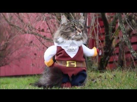 Костюм пирата для кошки⁄собаки с Aliexpress