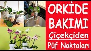 Orkide  Bakımı ve Püf Noktaları. oride çiçeği bakımı sulanması