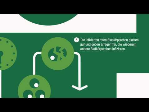 Der Malariakreislauf -- wie Malaria im menschlichen Körper wirkt