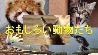 面白い動物たちの動画集【ハッピーレポートお届け隊】 あなたも確実にYo...