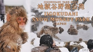 Jigokudani Snow Monkey Park (Nagano,JAPAN) Feb. 2017 The only place...