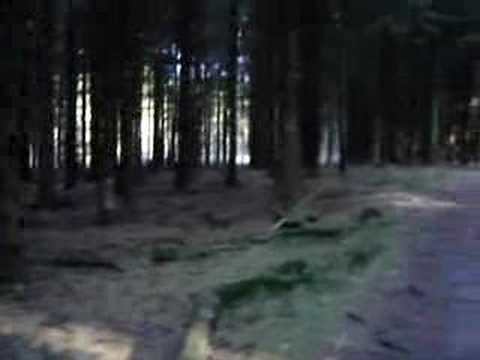 Floresta de La