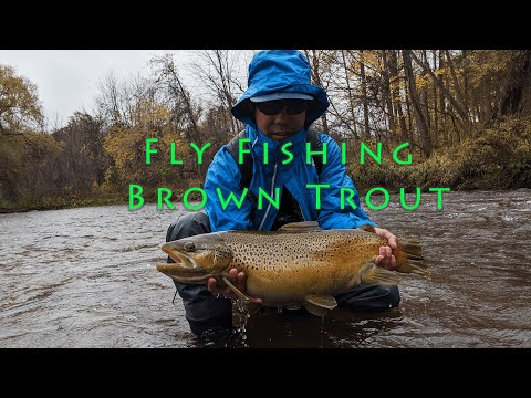 Fly Fishing Brown Trout (2019)