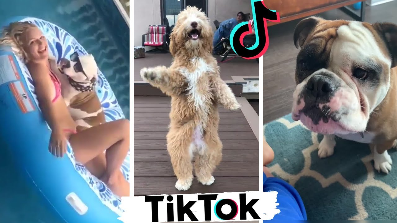 Dogs Doing Funny Things ~ Cute Puppies of TikTok