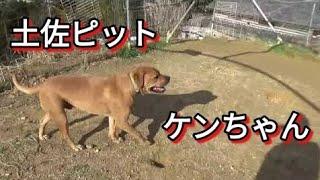 【関連動画リスト】 ドッグトレーニングについて https://www.youtube.c...