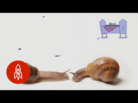 This Backward Snail Just Wants to Find Love